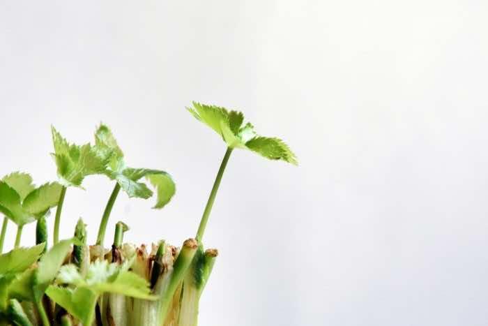 シェアハウスでも家庭菜園ができちゃう!?おうちで緑の癒しを感じよう!